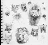 BearStudies