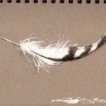 Feather0801