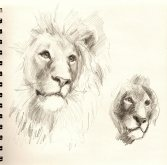 LionSketches1053