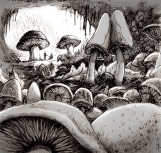 MushroomLand