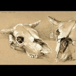 Cattle Skulls - ink on toned paper, 2014